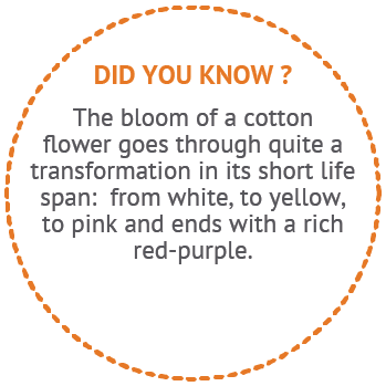 Did You Know - The Bloom