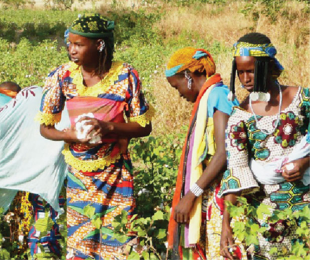 Organic cotton stories from the field - Bani Bunyo, Benin