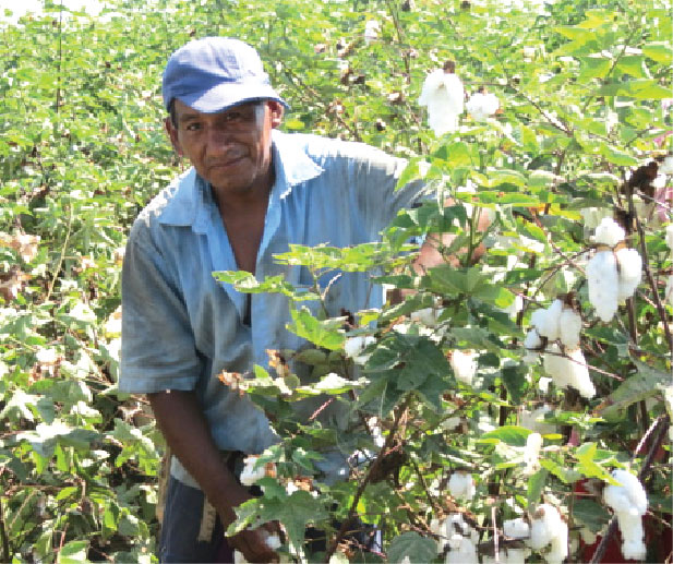Organic cotton - stories from the field - Francisco Almeida