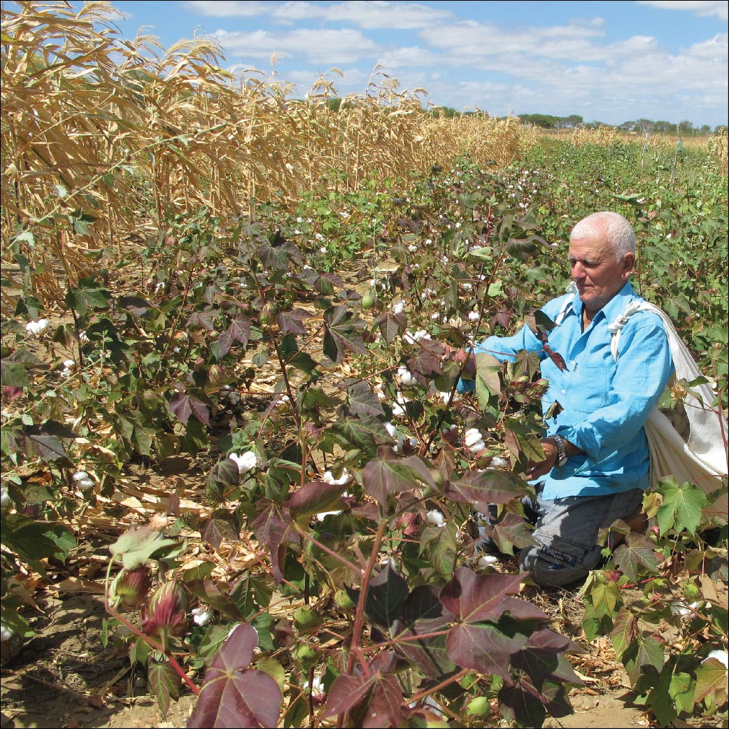 What Is Organic Cotton Farming System And How Does It Work