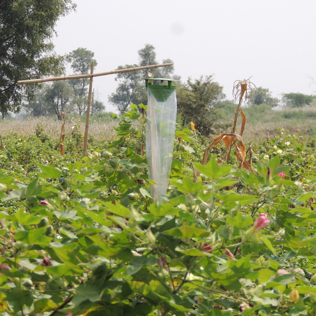 What is organic cotton farming system and how does it work?