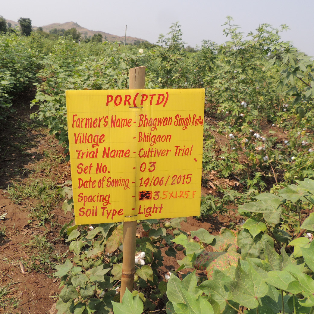 Organic cotton seed breeding
